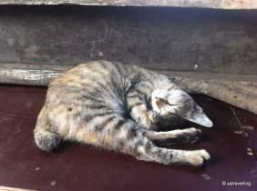 jakartian kittie