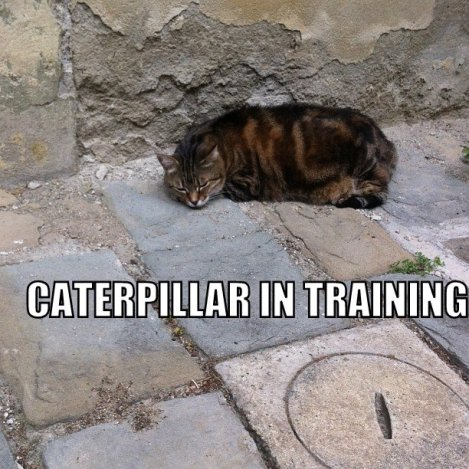 Caterpillar in training