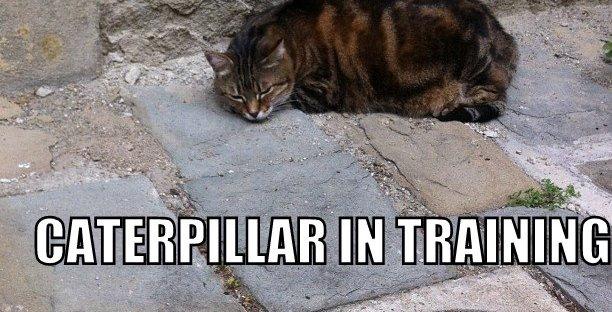 Caterpillar in training