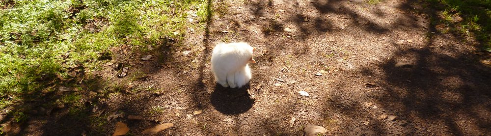fluffy in iguazu