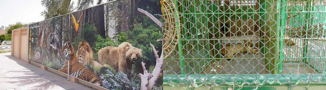 zoo in dubai