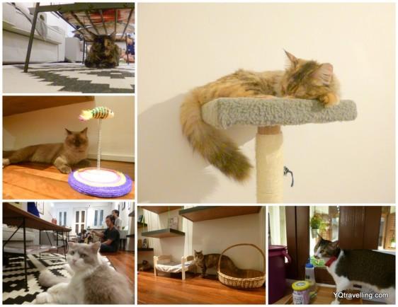 company of cats